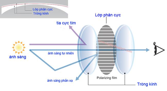mat_kinh_nu_polaroid_thoi_trang_ms718